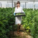 Are The Benefits Convincing Enough To Grow Your Own Marijuana?