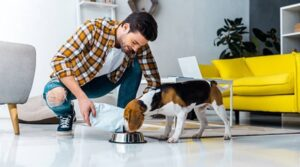 Pet Care – Rewarding Your Pet on a Responsible Schedule